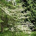 #natura #Przelewice #drzewa #rośliny