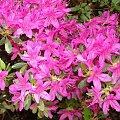 #natura #Przelewice #kwiaty #rośliny
