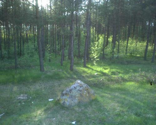 kozie góry, stawiski, las #stawiski #KozieGóry #las #kamień #drzewa #przyroda