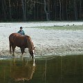 Starorzecze Wiaprza koło Niecieczy #starorzecze #koń