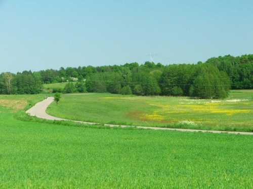 Droga do Markuszowa #łąka