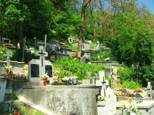 Cmentarz w Wąwolnicy #Wąwolnica #cmentarz