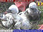 http://images22.fotosik.pl/128/df03e2f12f074d64m.jpg