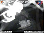 http://images22.fotosik.pl/136/1ad7b3d82b84cbbdm.jpg
