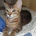 ostatnie moej zdjęcia koteckzów #lila