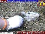 http://images22.fotosik.pl/147/218fdf1e81c60f5cm.jpg