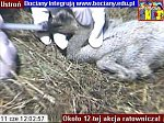 http://images22.fotosik.pl/147/a3dde8616eaf9fa3m.jpg