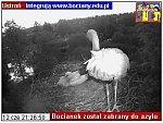 http://images22.fotosik.pl/151/0e26fcad36519fa2m.jpg