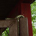 na furtce kojca:)) #natura #przyroda #zaskroniec #gady