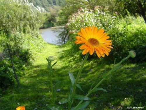 ... słońce i cień .... #kwiaty #lato