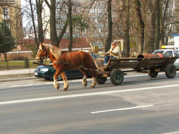 Wio koniku! #Puławy #koń #furmanka #fura #bat #furman #woźnica