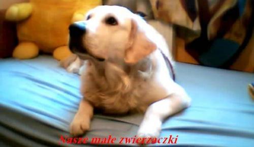 Forum Nasze małe zwierzaczki Strona Główna