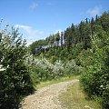 na północno-zachodnim stoku Skrzycznego #góry #Beskidy #BeskidŚląski #Szczyrk #Skrzyczne
