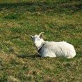 Wiosna w Leokadiowie #koza #Leokadiów
