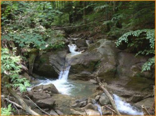 http://images22.fotosik.pl/80/3346463f7d2a7d63med.jpg